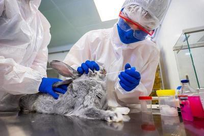 ¿Cuál es el fin de controlar el contagio de COVID-19 en animales? – Prensa 5
