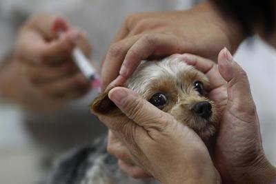 Rusia produce primer lote de vacunas anticovid para animales