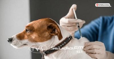 Rusia produce primer lote vacunas anti-Covid para animales