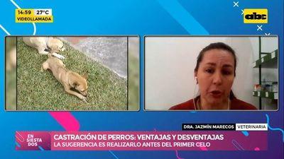 Ventajas y desventajas de la castración de perros