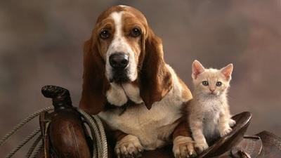 La ciencia explica: ¿Por qué las mascotas son tan buenas para la salud mental?