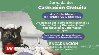 JORNADA DE CASTRACIÓN MASIVA A 80 ANIMALES DOMÉSTICOS EN ENCARNACIÓN.