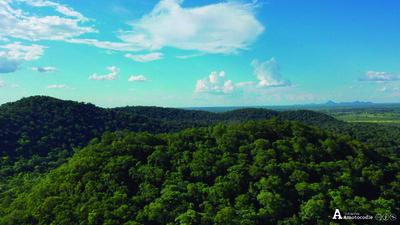 Ayoreos denuncian tala ilegal de bosques dentro de su territorio
