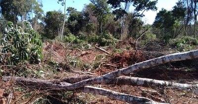 La Nación / Denuncian grave daño ecológico en el estero Guyraungua