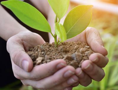 Plantatón 2021: Destinarán lugar para plantar árboles en memoria de los fallecidos por COVID