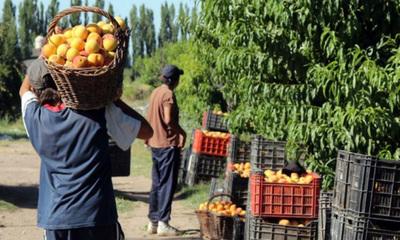 Frutihortícolas llegan a acuerdo con importadoras para vender sus productos