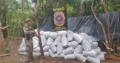 La Nación / Senad elimina tres toneladas de marihuana en la reserva Morombí