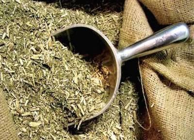 Adaptan yerba mate paraguaya para el mercado de Taiwán