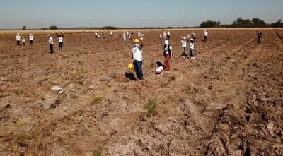 Exitosa plantación de 1.000 árboles en Guairá