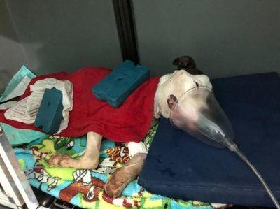 Imputan a un joven por mantener a un perro herido y en estado de desnutrición