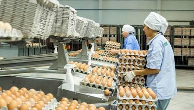 Las Tacuaras: Más de 1 millón de gallinas, protagonistas de una gran industria