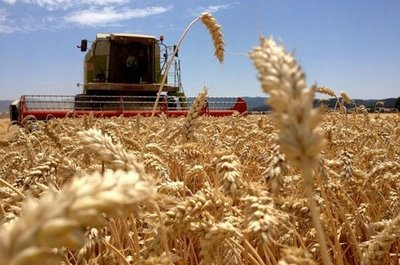 Inició oficialmente la siembra de trigo 2021