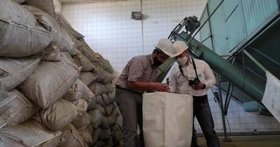 La Nación / Impulsan el desarrollo y mejoramiento del sector yerbatero