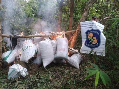 Canindeyú: Aprehenden a una persona con antecedentes y hallan 501 kg de presunta marihuana