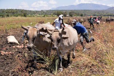 Las deportaciones y el éxodo de haitianos encarecen la comida en República Dominicana