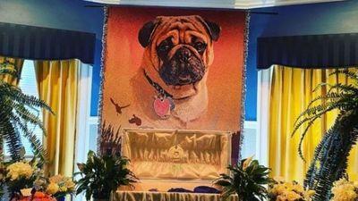 ¡Por todo lo alto! Un hombre organizó un lujoso funeral a su perrito