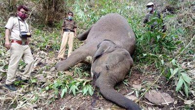 ¡Increíble! 18 elefantes fueron aniquilados por un rayo en la India