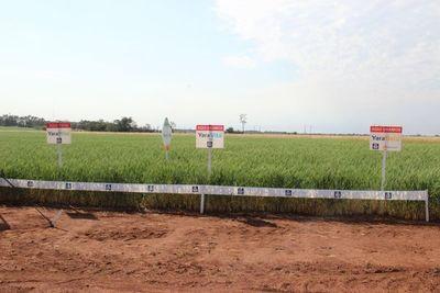 Agrosystem con fertilizantes Yara para todos los cultivos