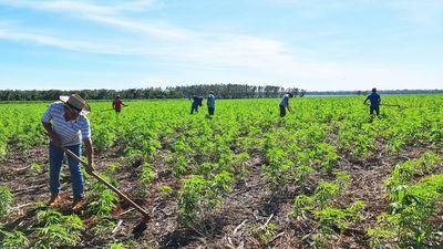 Healthy Grains S.A líder en exportación de semillas