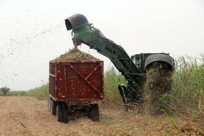 Catorce rubros agroalimentarios de Bolivia, atractivos para las inversiones