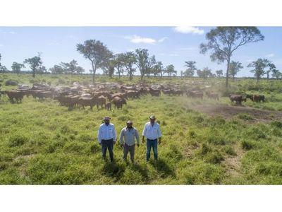 Ganaderos ven ventajas de sostenibilidad en el Chaco