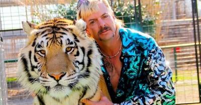 """La Nación / """"Tiger King"""": justicia de EEUU decomisa tigres y leones"""