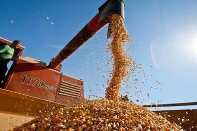 Exportaciones de maíz de la zafra 2020 cerraron con significativa reducción
