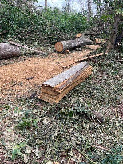 Preocupa destrucción de reserva forestal del San Rafael
