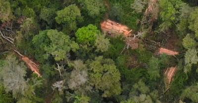 La Nación / Ambientalistas denuncian invasiones y tala ilícita en la reserva San Rafael