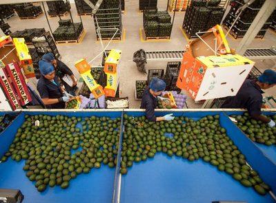 Las exportaciones agropecuarias de México crecen 10,5 % en abril