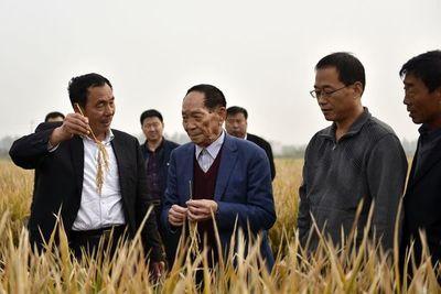 """Falleció Yuan Longping, el """"padre del arroz híbrido"""" que acabó con el hambre en China"""
