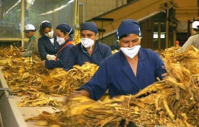 """Cadep asume el error en investigación sobre """"superproducción"""" de cigarrillos"""