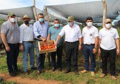 Auspicioso inicio de cosecha de tomate en R. i. 3 Corrales