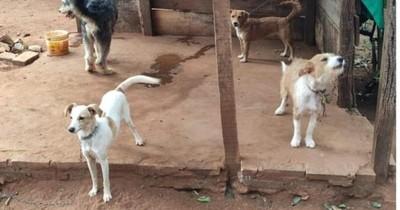 La Nación / Rescatan a 8 perros atados y mal cuidados de una casa en San Lorenzo