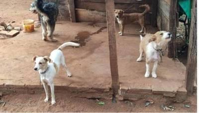 Rescatan a 8 perros tras denuncia por maltrato animal en San Lorenzo