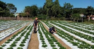 La Nación / Acciones del MAG benefician a productores de Paraguarí