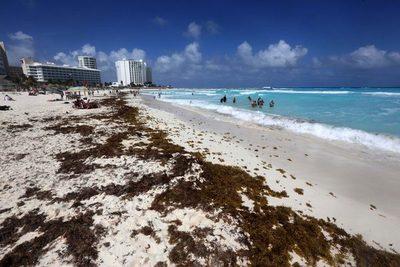 Aumentan las playas con abundante sargazo en el Caribe mexicano