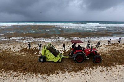Aumentan playas con abundante sargazo en Caribe mexicano