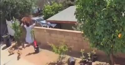 La Nación / Video viral: una adolescente se enfrentó a un oso para defender a sus mascotas