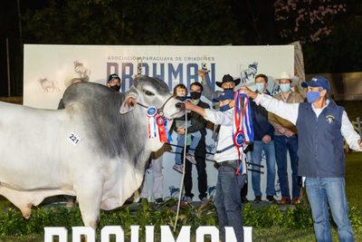 Hoy jueves, Las Talas Show presentará toros para remate con beneficios exclusivos