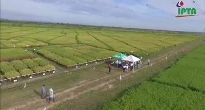 IICA e IPTA instalarán laboratorio para la investigación agropecuaria