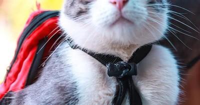 """La Nación / Bochornoso episodio: invitan a """"El gato mochilero"""" a charla y tratan a su dueño de maltratador"""