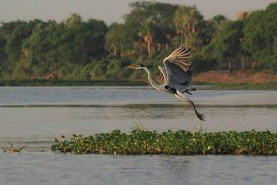 Ley de educación ambiental: Deuda pendiente de Paraguay con sus recursos naturales