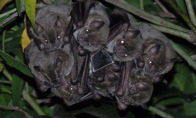 La belleza de la función que cumplen los murciélagos: unos incomprendidos más