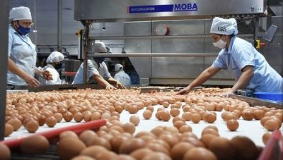 Visitamos Nutrihuevos: más allá de producir, busca dar impacto de valor triplicado como líder del rubro (G. 140.000 millones de facturación en huevo)