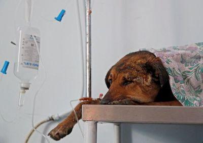 Muerte de mascotas en ataques israelíes otro trauma para los niños de Gaza