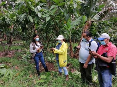 Los productores de cacao modernizan sus técnicas agrícolas en Nicaragua