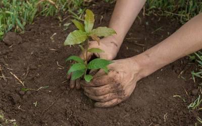 Por la celebración del Día del Árbol: Impulsan proyecto de arborización en el Parque Ñu Guasú