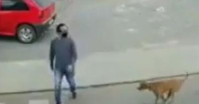 La Nación / Video viral: hombre intentó cruzar la calle y fue atropellado por un perro