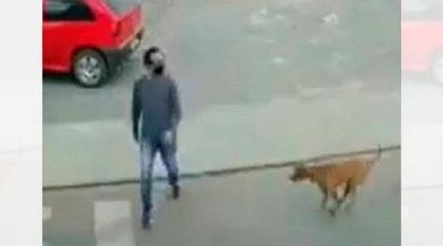¡Increíble! Hombre quiso cruzar la calle y fue atropellado por un perro (VIDEO)